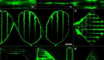 Vida Artificial - Biomateriais se autoreproduzem