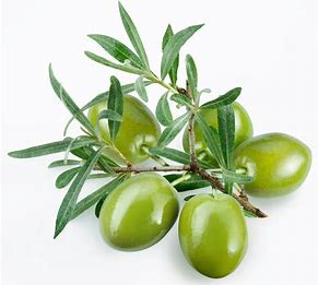The skin of an Olive