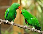 טיפול בציפורי נוי