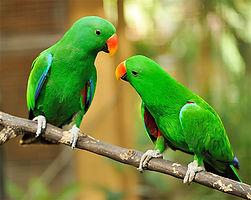 Гледане на папагали, птици, игуани, морски свинчета, хамстери,рибки и много други