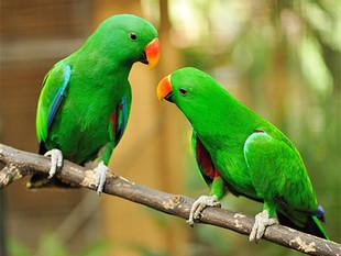 Nemoci papoušků a drobných pěvců