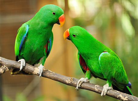 #birdbox and Your Goals