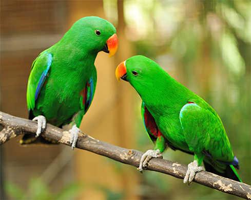 'Pick & Peck the Parrots'
