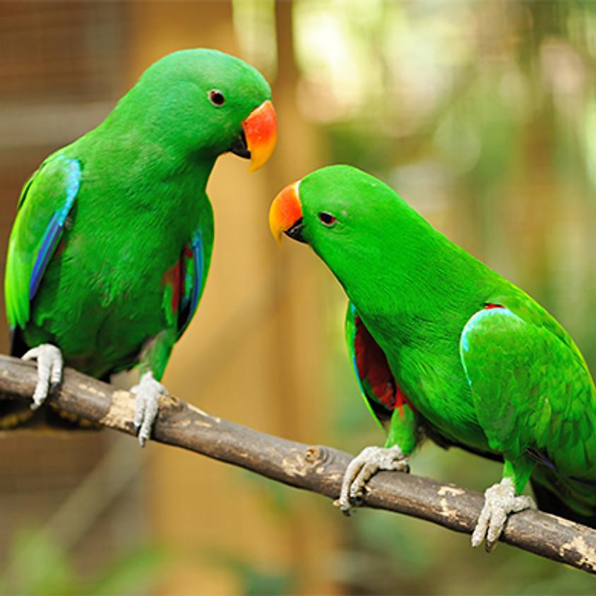 Bird Photography Workshop