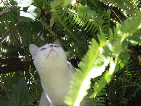 Photos of Plants and Luna(tic) the cat