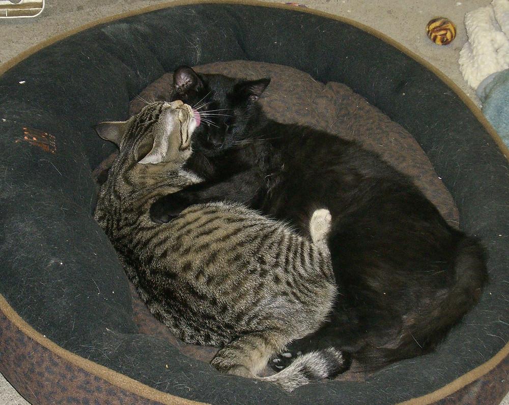 07-09 Madeleine & Montel (3).JPG