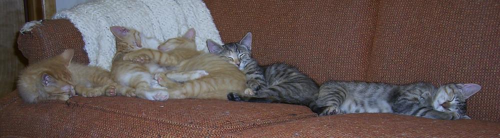 06-11 SPCA Litter.jpg
