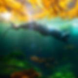 Monterey Freedivers Facebook Page.jpg