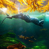 Monterey Freedivers Facebook Page.jpg