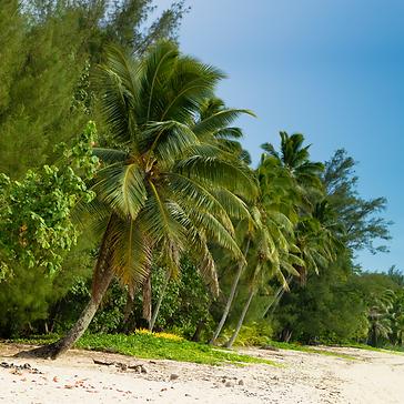 Panama Island Photo.png