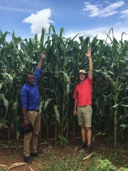 andrew corn