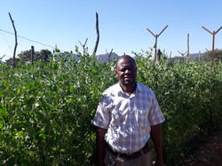 obrian crop