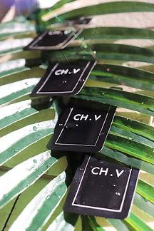 CH.V fresh collagen film