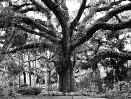 Et si on dessinait son arbre de vie ?