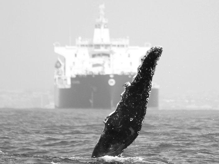 humpback whale algoa bay