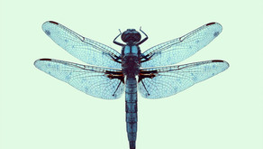 Messages from the Dragonfly