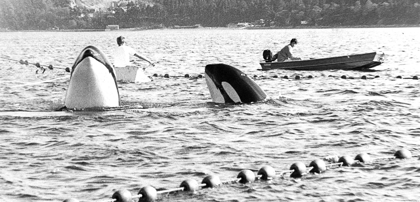 Penn Cove Capture Aug 8 1970