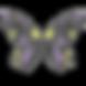 borboletacores_edited.png