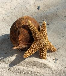 Starfish & Coconuts