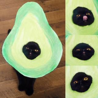 Meow Avocato!