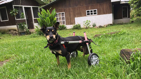 Vicky on Wheels!