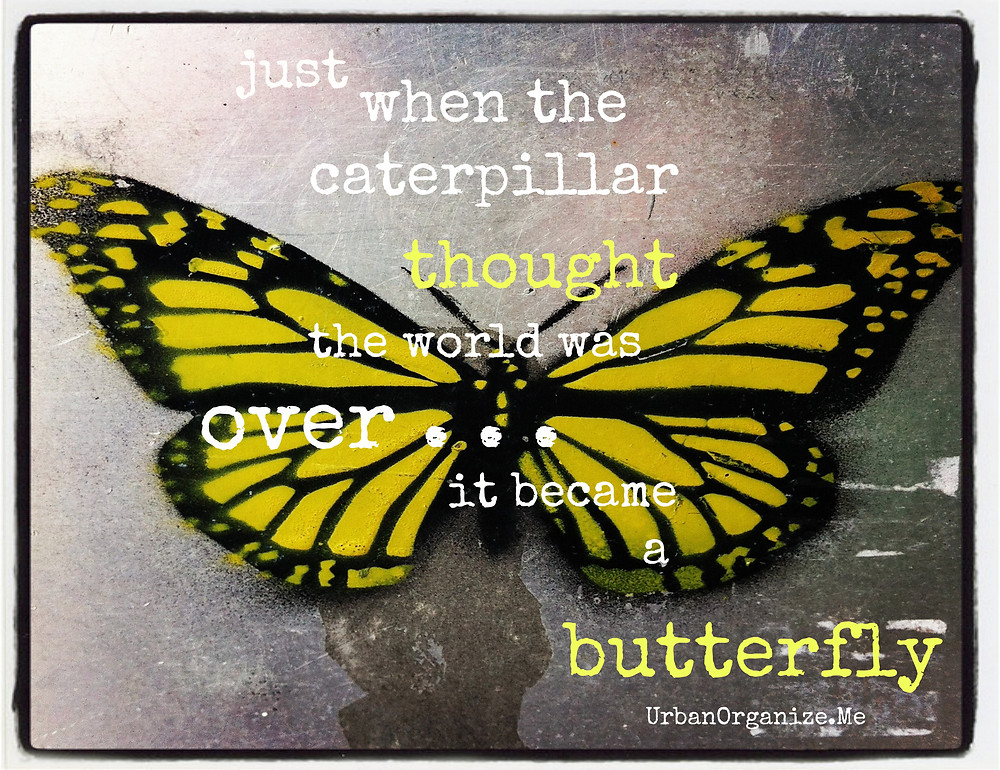 Yellow Butterfly with Logo.jpg