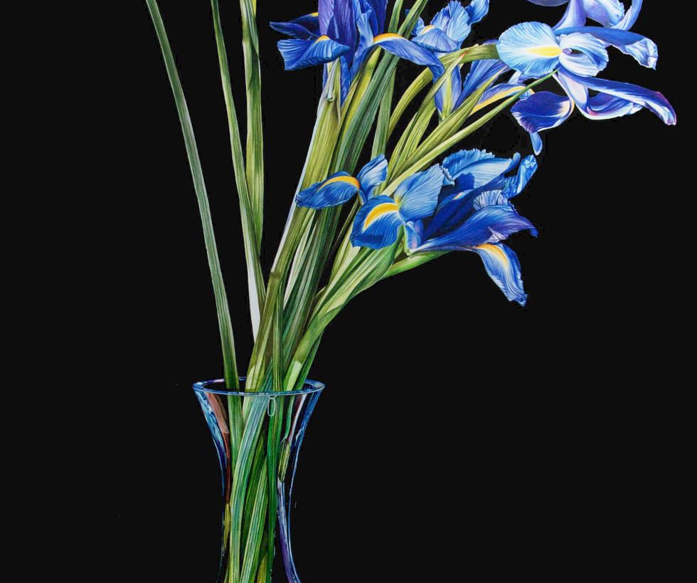 IrisJeannettesiroishyperrealismbotanical