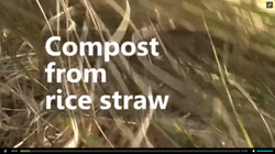 Compost from Rice Straw