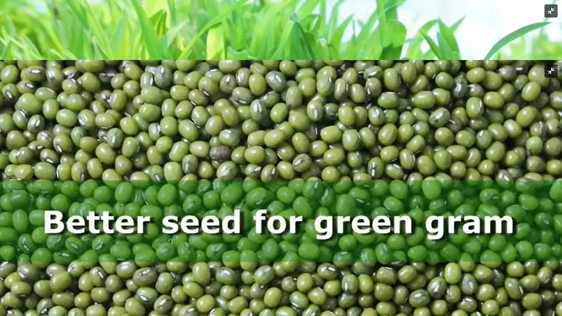 Better Seed for Green Gram