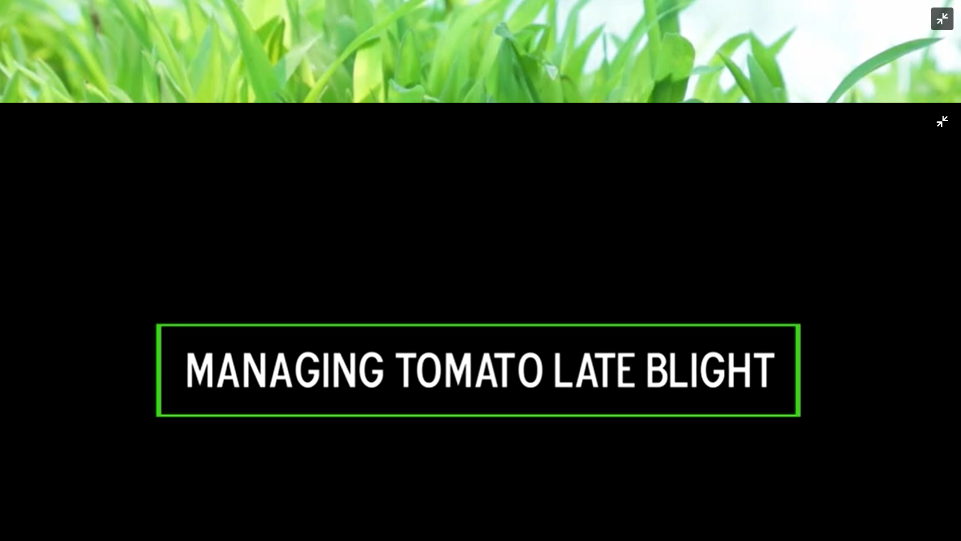 Managing Tomato Late Blight