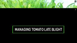 Managing Tomato Late Blight