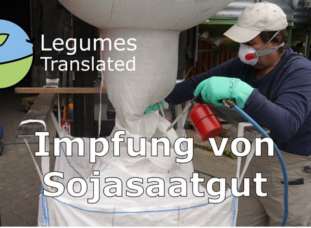 Inoculation of soya seed - Seventh Legumes Translated video published