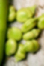 98542569_close up faba beans_xl_123rf_s.