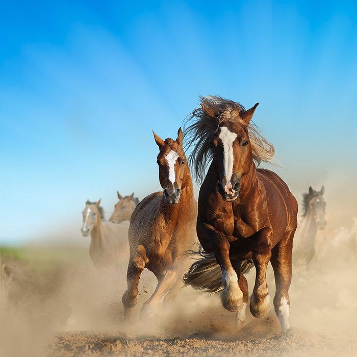 horsesnfr.jpg