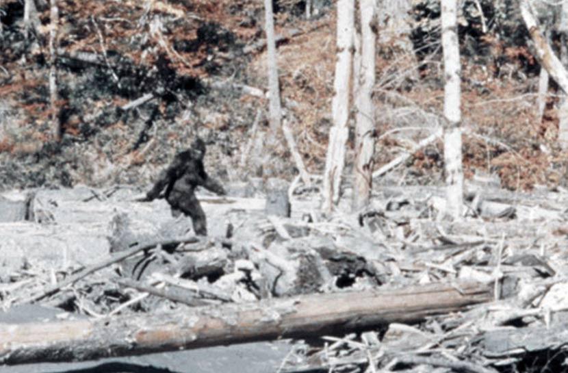 A mais famosa fotografia do pé-grande, tirada na Califórnia