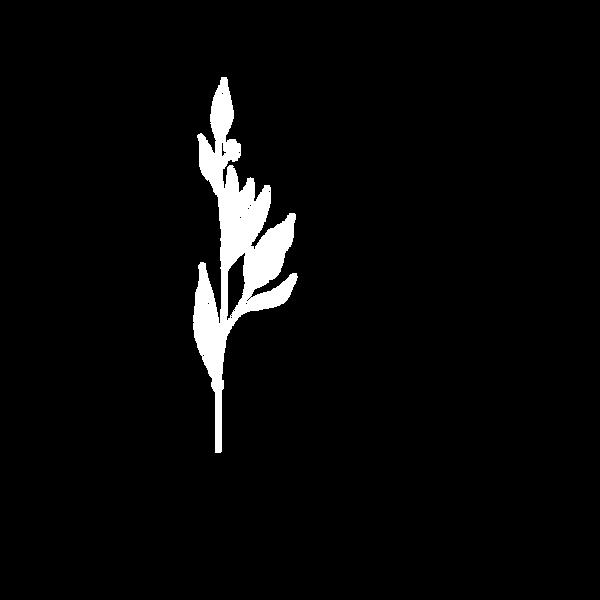 plant1 copya.png