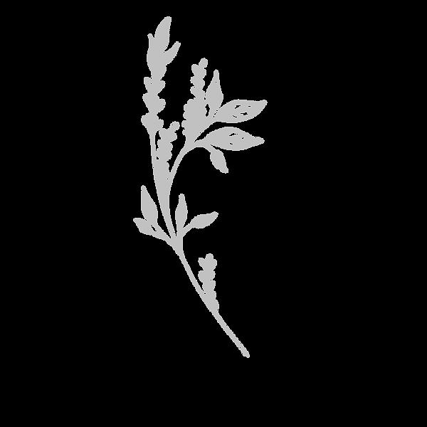 plant18 copyA.png