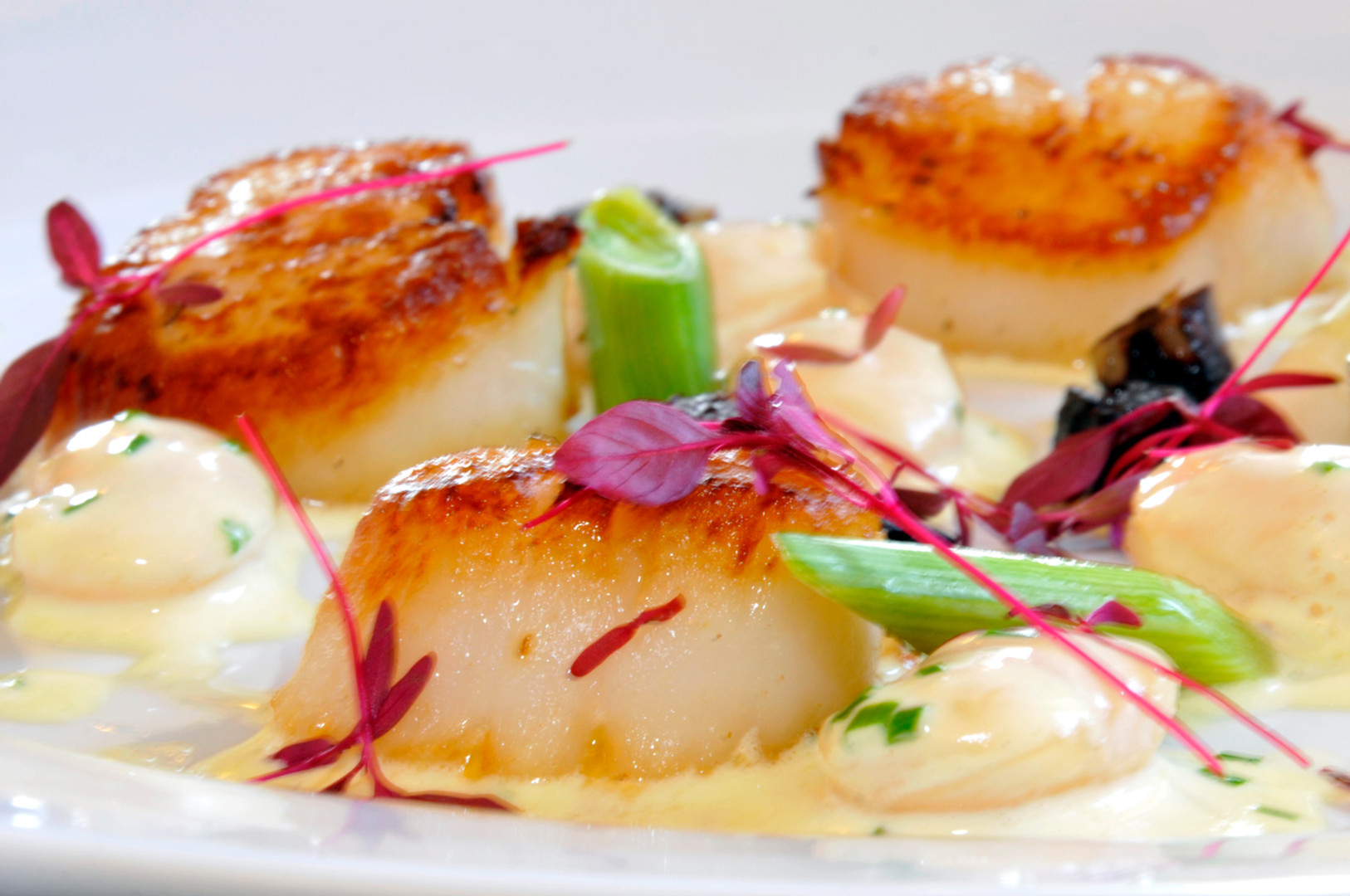 Scallops-Cropped-HR.jpg
