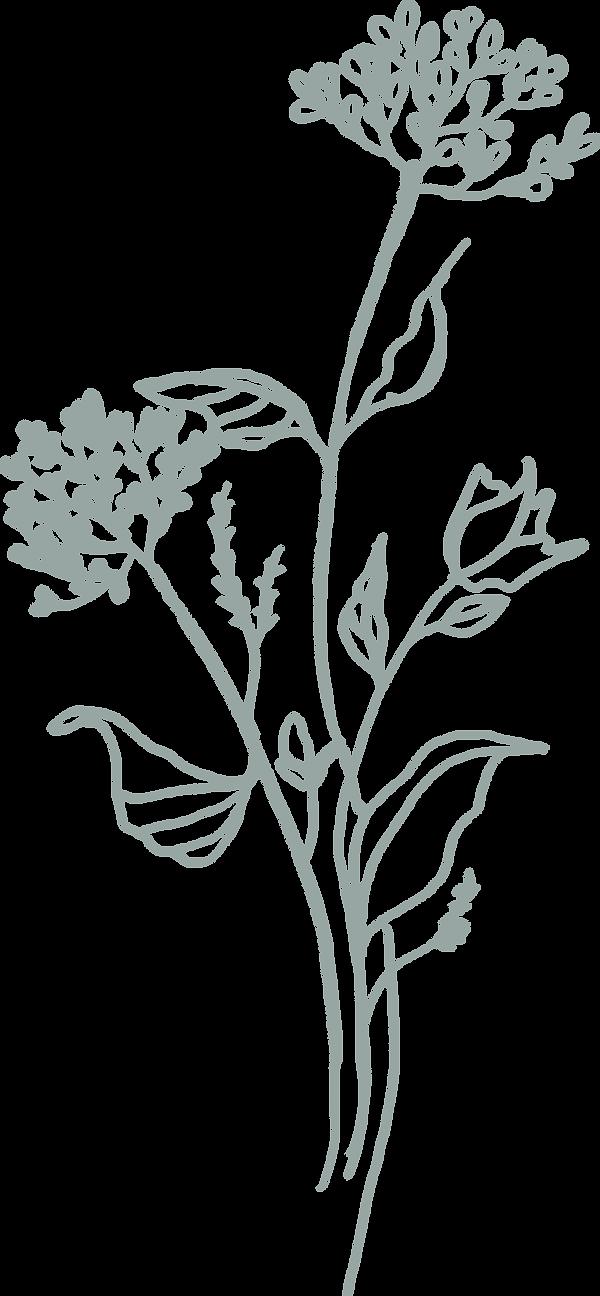 plant17 copyA.png
