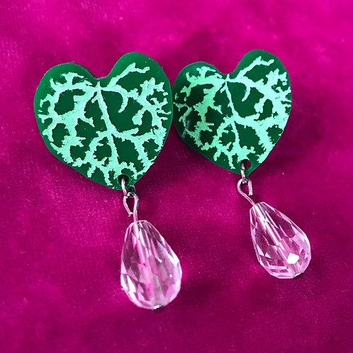 Ceropegia(String of Hearts) Mini Drops