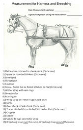 Measurement-for-Harness-Breeching-2014-4