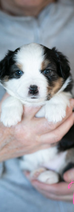 puppies-.jpg