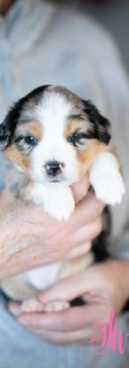 puppies--7.jpg