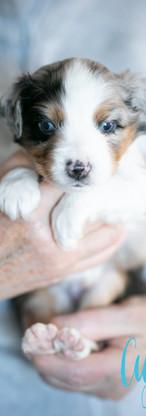 puppies--3.jpg