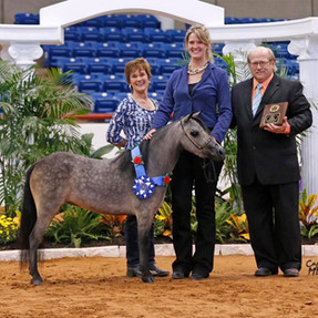 The AMHA International Gamblers Choice Halter Class