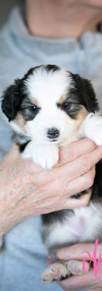 puppies--8.jpg