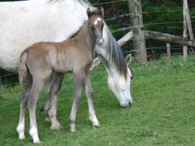Ari and his mum