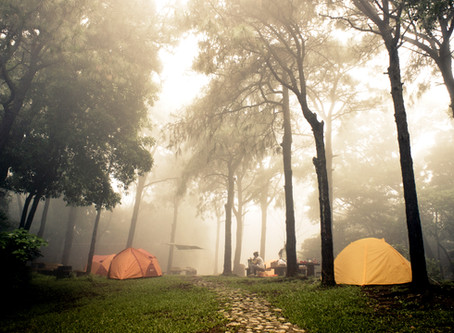 CAMPing season is just around the corner,  watch out for snakes in the grass