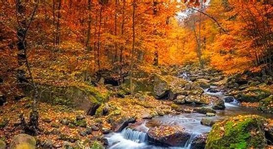 fallfoliage_edited.jpg
