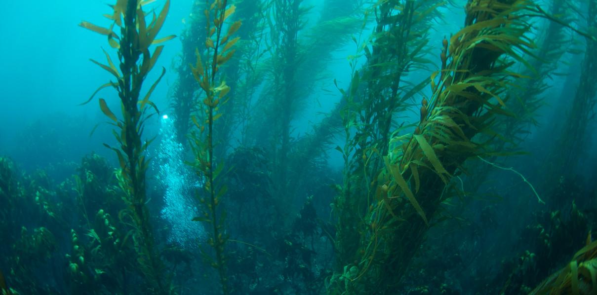 Falkland Island Diving